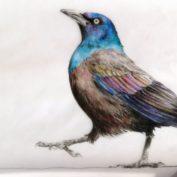 44_PRIDE_Farbstift auf Papier A4